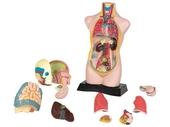 Anatomy set