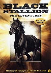 Black stallion : the adventures