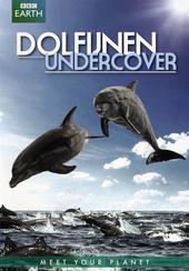 Dolfijnen undercover