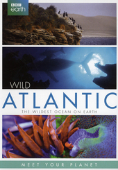 Wild Atlantic : the wildest ocean on earth