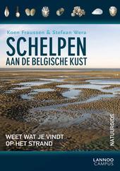 Schelpen aan de Belgische kust : weet wat je vindt op het strand