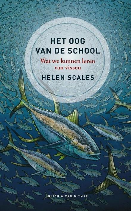 Het oog van de school : wat we kunnen leren van vissen