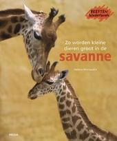 Zo worden kleine dieren groot in de savanne