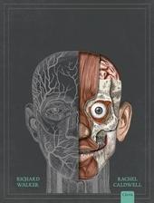 Het menselijk lichaam : een pop-up anatomische gids