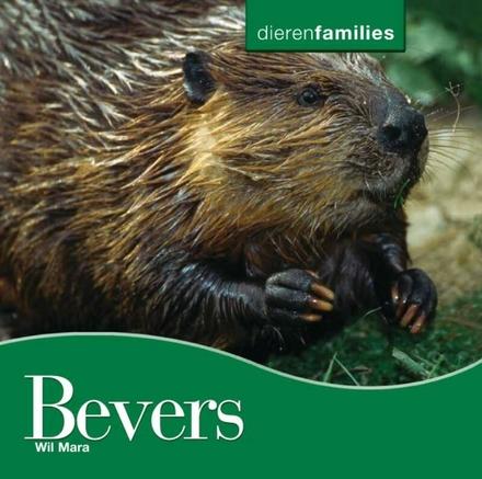 Bevers