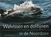 Walvissen en dolfijnen in de Noordzee