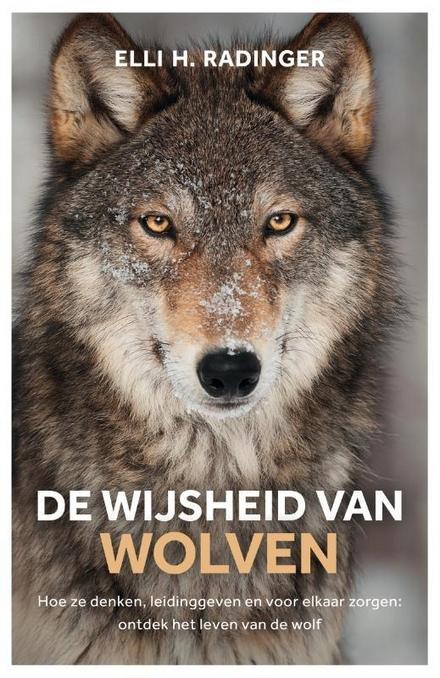 De wijsheid van wolven : hoe ze denken, leidinggeven en voor elkaar zorgen : wat de wolf ons kan leren over mens zijn