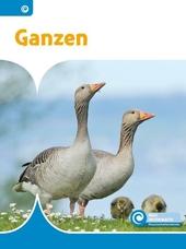 Ganzen